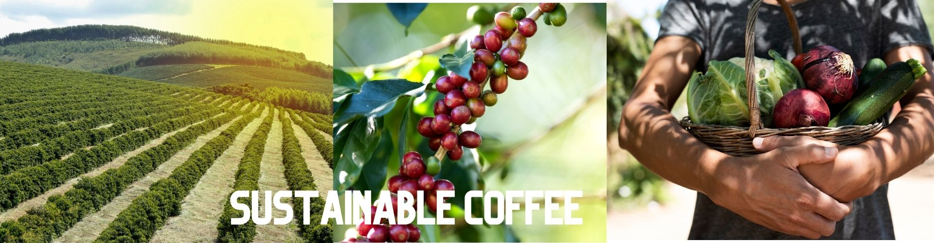 sustainable coffee banner image
